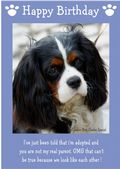"Cavalier King Charles Spaniel-Happy Birthday - ""I'm Adopted"" Theme"